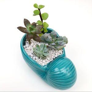 Live Succulent Arrangement Nautilus Ceramic Plante